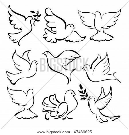 Ilustración de vector set bosquejo abstracto de la paloma