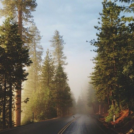 Foggy road. It's like our road at Windemere to the Lake <3