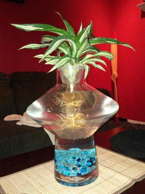 44 best betta fish tank ideas images on pinterest fish for Fish bowl vase