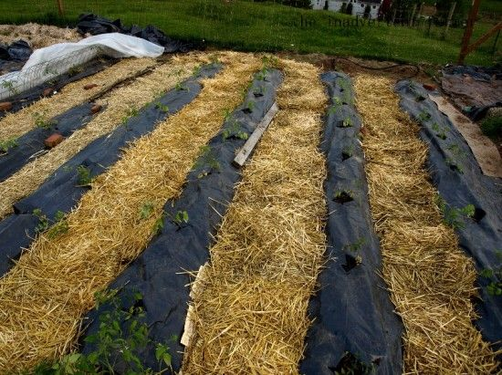 How To Preserve Water In Your Garden {8 Tips} plus many other interesting links all about gardening.