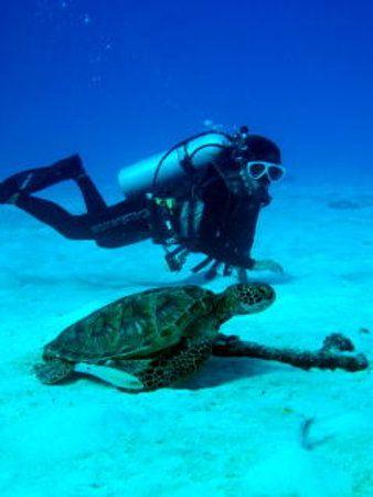 サイパンの海でダイビング。 こんな近くでカメがみれます。サイパン 旅行・観光のおすすめスポット。