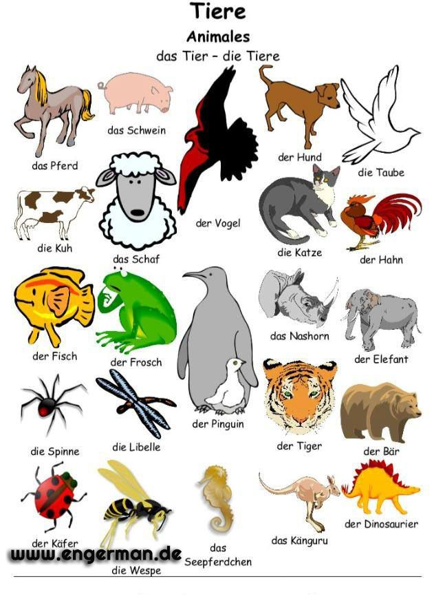 105 best Tiere images on Pinterest | German language, Languages and ...