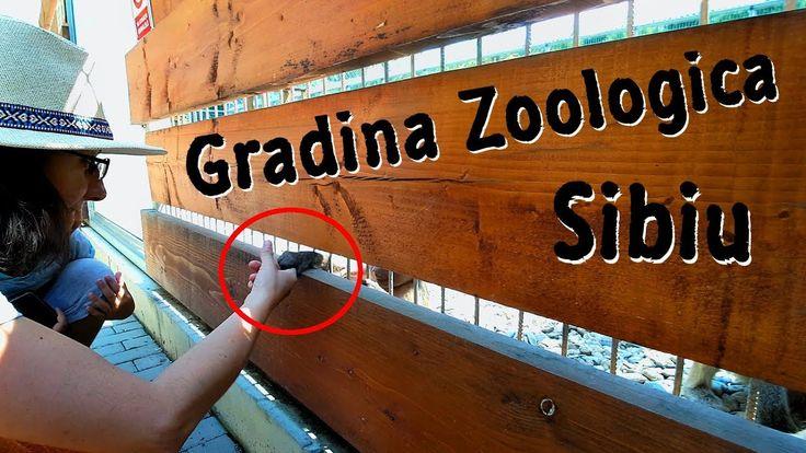 O maimuta de la Gradina Zoologica din Sibiu era sa-mi fure paravantul de...