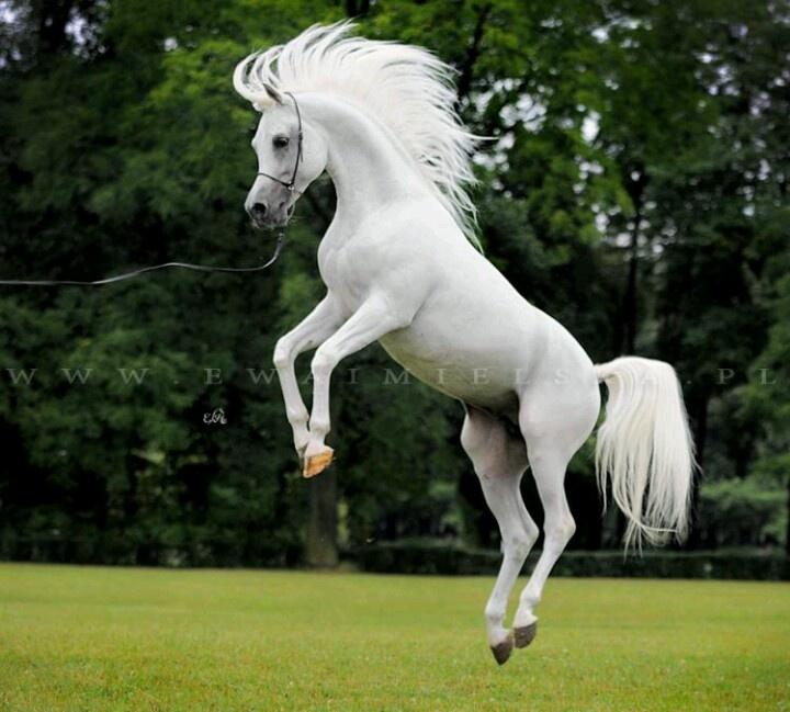 Miniature horse   Whoa...Just being a Horse...   Pinterest