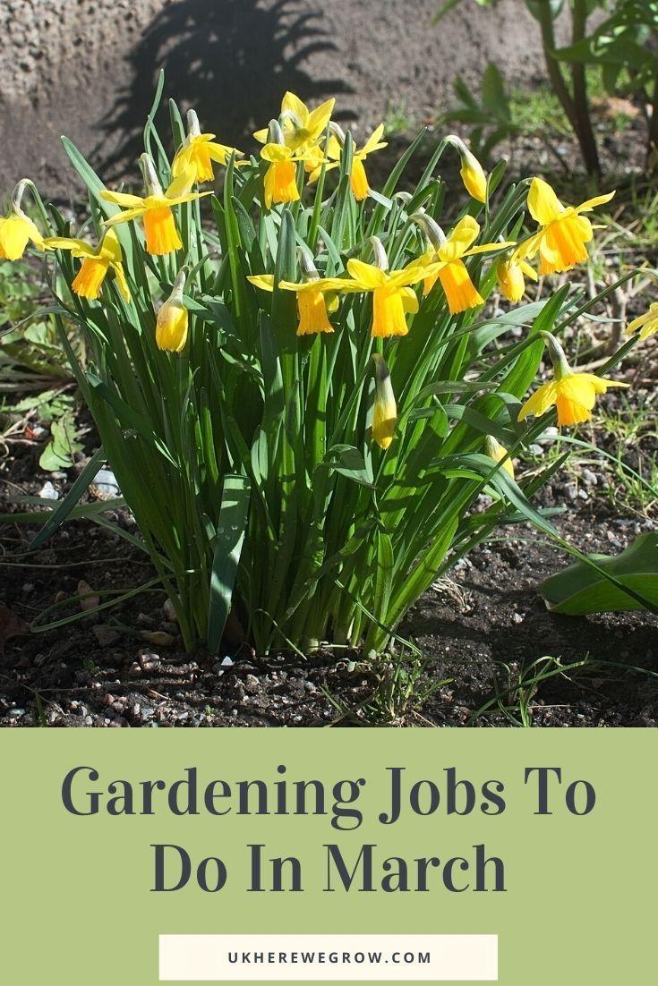 Pin On Great Gardening Tips
