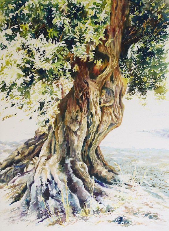 Olive tree - watercolor by Beni Gassenbauer