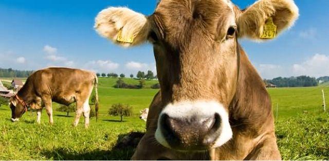 Блог Александра Овчаренко: В Украине сильно подорожало сырое молоко