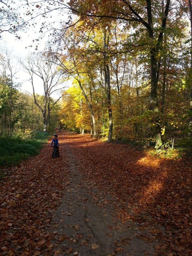 秋は紅葉を楽しむことができるフランス・パリにあるブローニュの森。