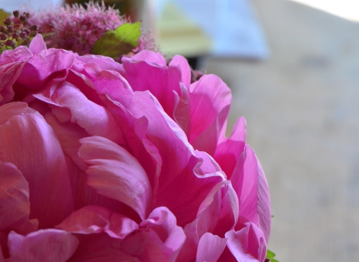 Peonies are best enjoyed pink.