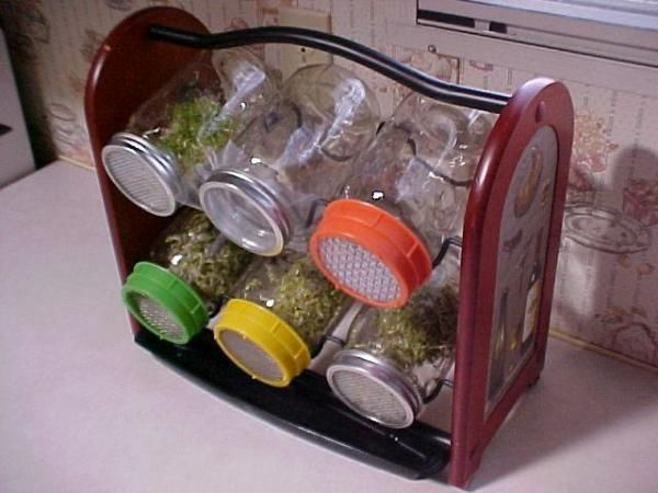 Growing Sprouts Next to Your Kitchen Sink - Here's an inexpensive way to add more vegetables to your diet all year, and all it takes is a quart jar and a spot near your kitchen sink. Most are said to have around 30 times the nutrients as full-grown vegetables, plus sprouts don't produce intestinal gas.
