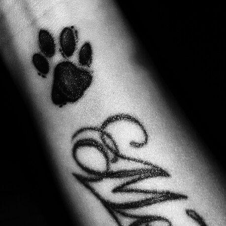 #Tatoo #cat