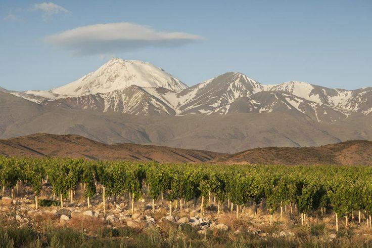 #Mendoza #TierraDeVinos  #ArgentinaEsTuMundo en www.facebook.com/viajaportupais