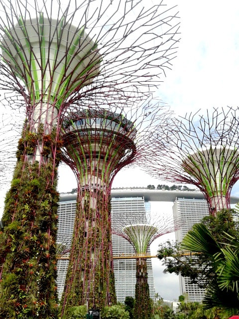 The Supertree Grove. Gardens By The Bay. Singapore.