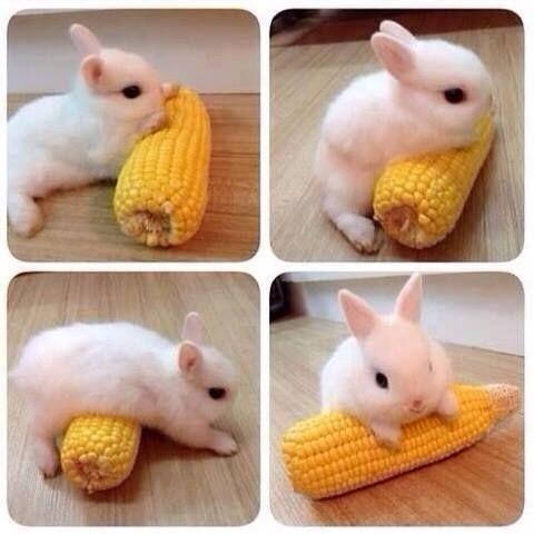 Un lapin, un épi de maïs, une grande et belle histoire d'amour