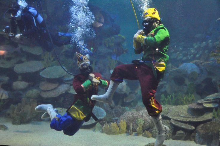 Karagöz & Hacivat traditional shadow play underwater show @Turkuazoo Akvaryum Aquarium