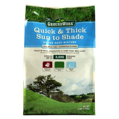 Quick & Thick Sun to Shade Grass Seed Mixture. Southern formula, 5 lb. $12.99 ☆☆☆☆☆ 5 out of 5 stars. · 5 months ago wow that was fast I used to buy other know brand grass seed but it never grew or grew a little. I live in florida its very hot and the sun is searing not to mention the dirt here is more like sand. its hard to grow grass. I bought the 5lb bag of this did my front and back yard tilled it threw down some hay only took one bag. less than a week later grass is EVERYWHERE.