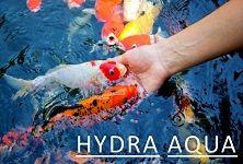 Hydra-Aqua