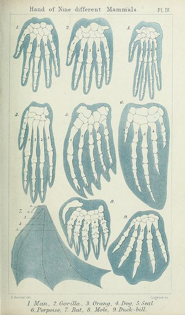 n50_w1150 by BioDivLibrary, via Flickr