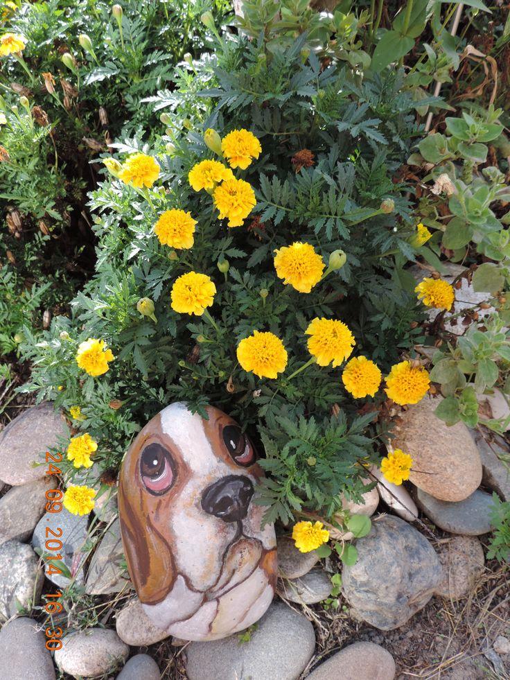 Собака в бархатцах(роспись камня акриловыми красками)