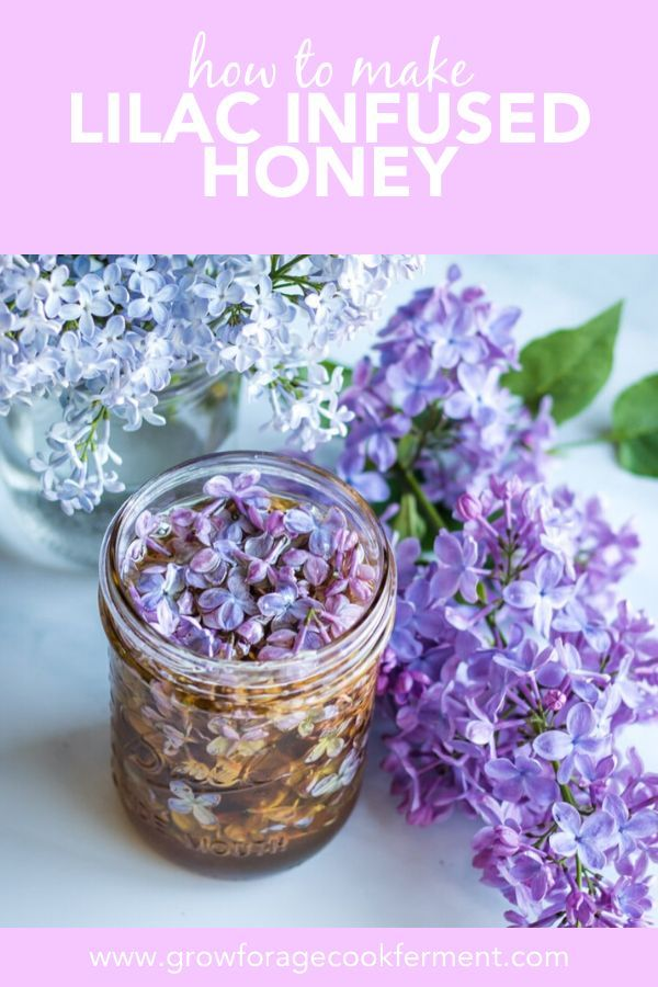 Lilac Flower Infused Honey Recipe Flower Food Lilac Edible Flowers