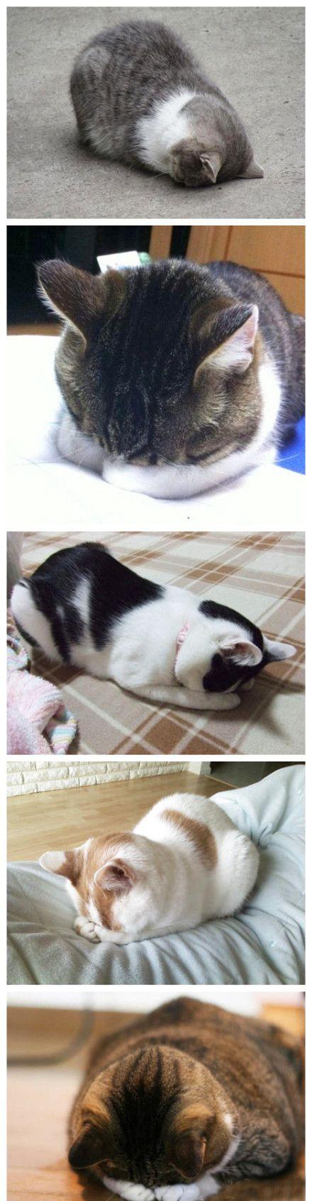 I love when kitties sleep on their faces!