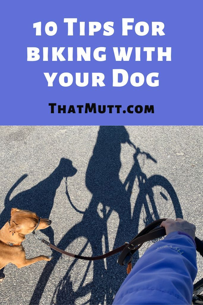 10 Tips For Safely Biking With Your Dog Dog Walking Business