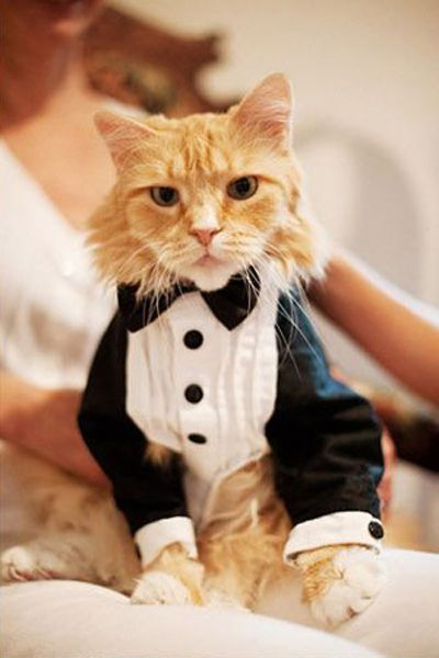 More and more pet owners are finding adorable ways to include pets at weddings. Photo: wedding-retoucing. #pets #weddings