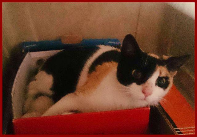 FUGA, mamá #gata rescatada de #SportDog después de dar a luz. Ha encontrado una nueva vida gracias a La Gatera, asociación de Segovia. http://protectoralacandela.org/fuga-y-sus-bebes-viajan-su-nueva-vida/
