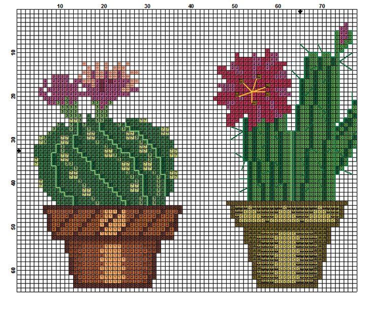 kaktusy cc 3