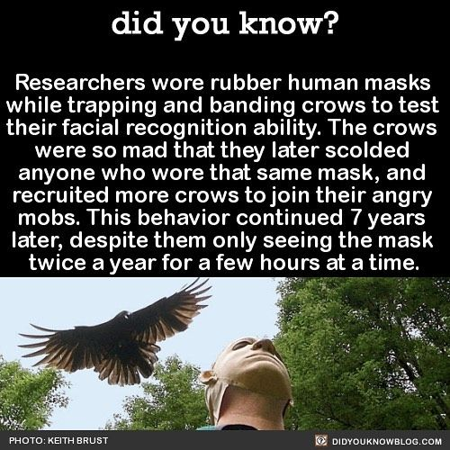I love scientists. They just do the most stupid and hilarious things