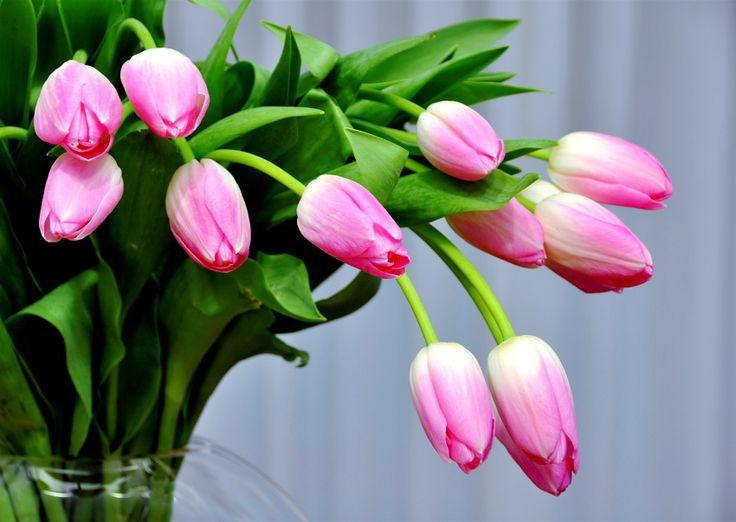 Vamos lá colocar os neurónios a trabalhar, com este problema do quarto ano de escolaridade. A Mafalda foi com o Hugo à florista. Nessa florista, as tulipas, independentemente do seu tamanho, têm todas o mesmo preço. Assim como as rosas também possuem todas o mesmo preço. A Mafalda comprou duas dúzias de tulipas e três meias dúzias de rosas por 72€. O Hugo comprou uma dezena de tulipas e um quarto de cento de rosas por 65€. Quanto custou no total as tulipas que aparecem na fotografia? :-)