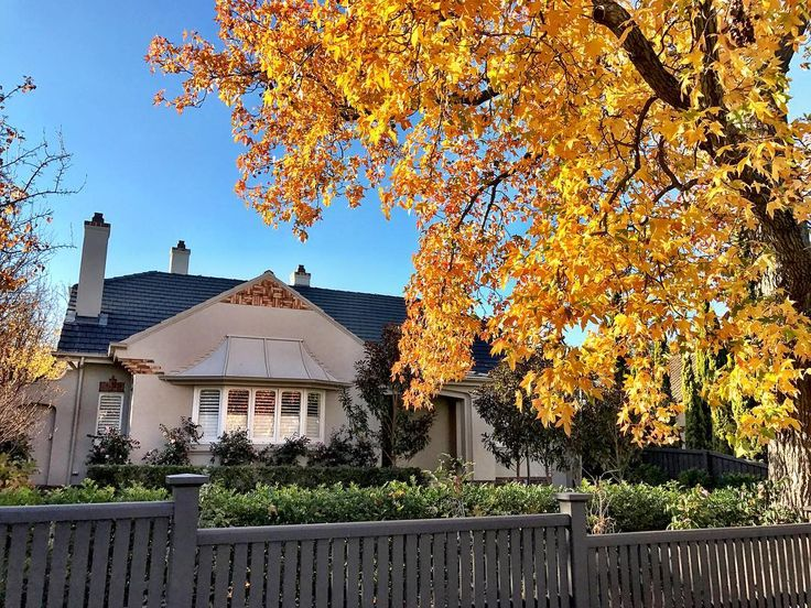 The combination of two of my favourite things in one picture - architecture and botany. • • The brilliant golden yellow of this Liquidambar styraciflua can't be missed. It is recognisable by the combination of its five-pointed star-shaped leaves and its hard, spiked fruits. The autumn colour adds to the appeal of this period home in Melbourne. • • • #liquidambar #sweetgum #garden #gardener #plants #flowers #instagram #picoftheday #melbourne #instadaily #instamoment #bestoftheday #tree #trees…