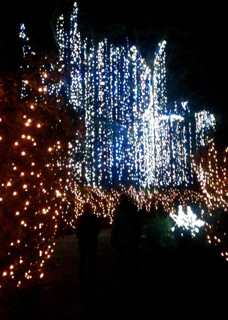 39 best Magic Christmas in Lights images on Pinterest | Christmas ...