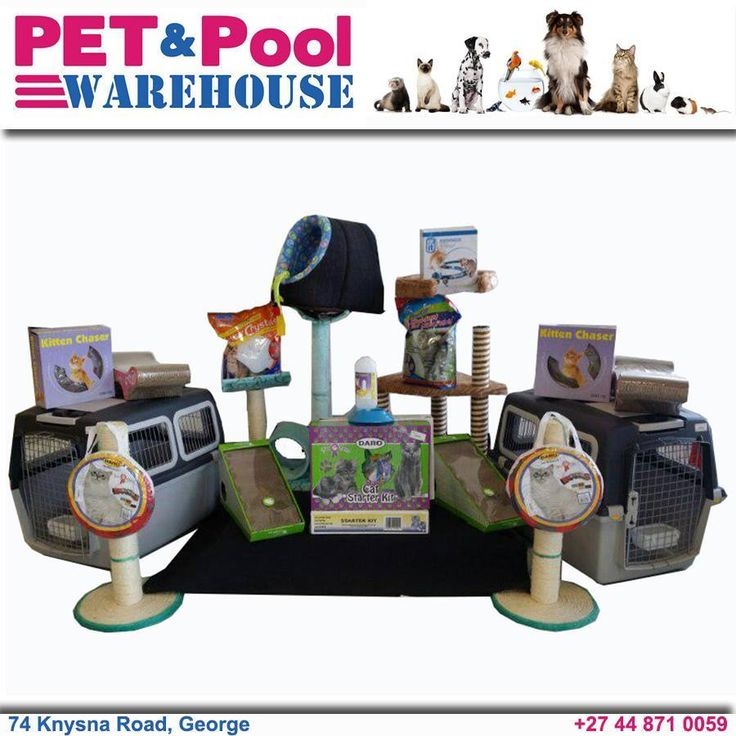 It's a feline paradise at Pet & Pool Warehouse with everything you need to make your cat happy. #lovecats #petpool #gardenroute