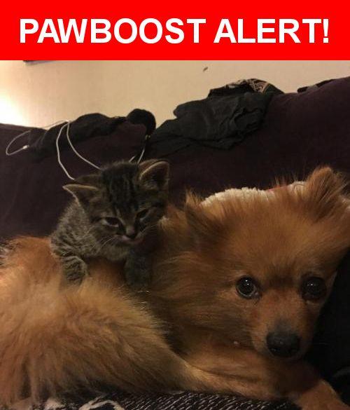 Please spread the word! Minit was last seen in Boise, ID 83702.    Nearest Address: Near N 27th St & Hazel St