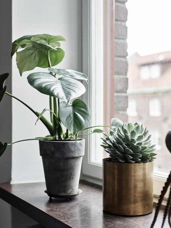 Die Besten 20+ Fensterbank Deko Ideen Auf Pinterest ... Wohnzimmer Deko Tipps