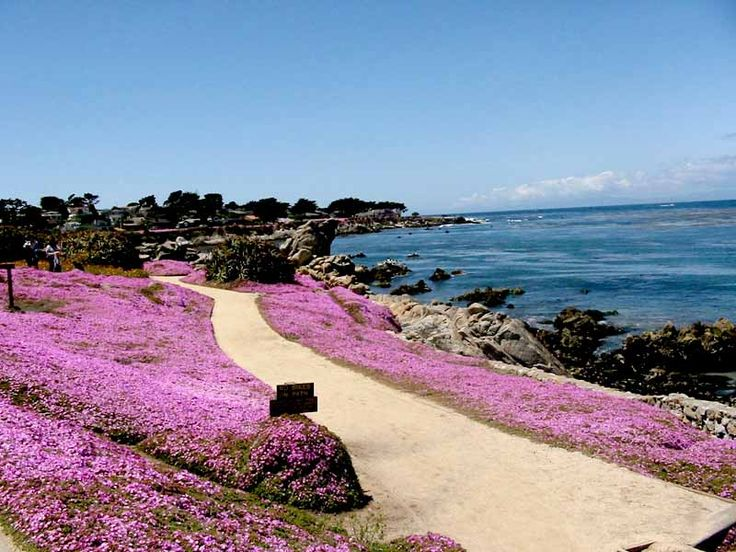 Pacific Grove, CA. Max the Bulldog loves coming here and going on a brisk walk by the ocean.