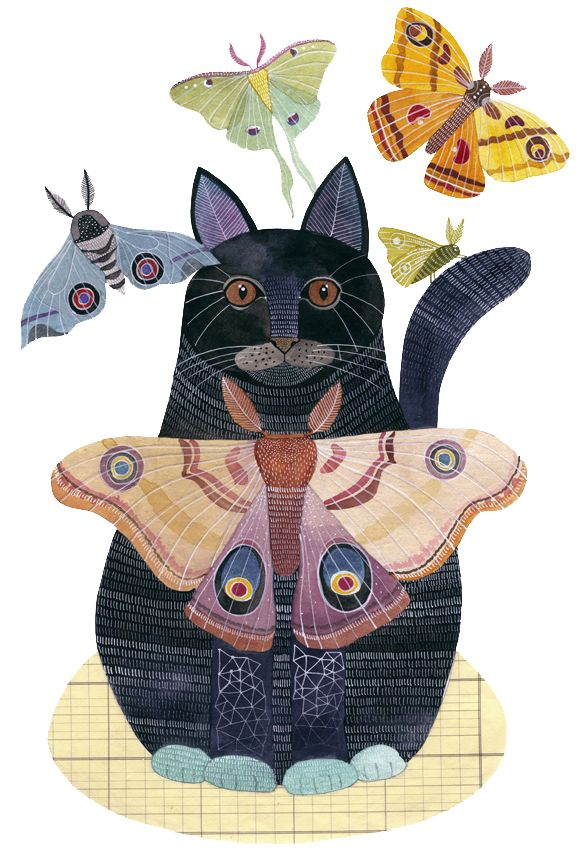 moths and cat