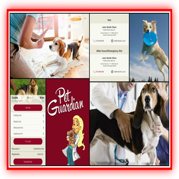 Download our user friendly PetGuardianApp to store all the information about your Pet -  like vet information, pet sitter, health information, daily needs etc.     Available at -   https://itunes.apple.com/us/app/pet-guardian/id1095831023#petsitter #petcare #pethealth #petinformation #petdog #petcat #petguardianapp