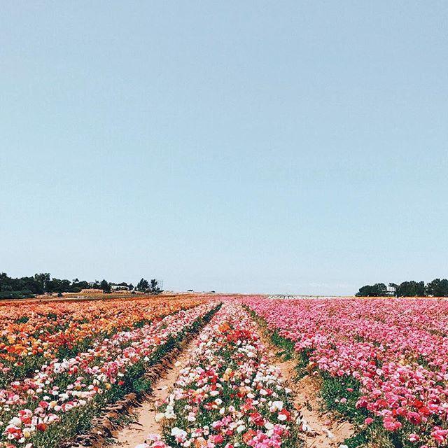 Floral views.   via @ariellevey