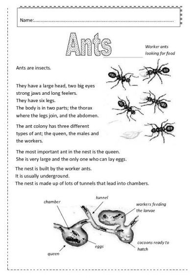 fun facts about ants for preschoolers insects worksheets free ants worksheet free esl 219