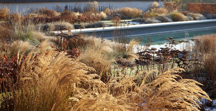 Perennial border with grasses, winter -- landscape design: Tom Stuart-Smith -- photo: Allan Pollok-Morris