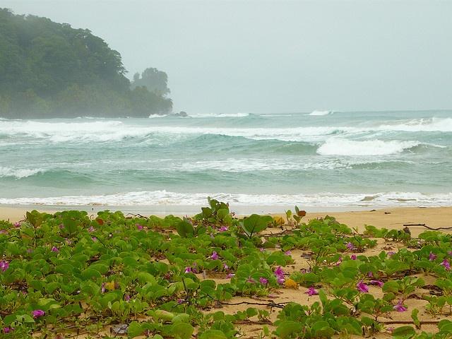 Wizard beach, Bastimentos island, Bocas del toro, Panama