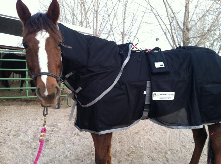 Elite Equine Sports Massage Therapy's Blog and Learn More About PEMF (Pulsing Electro Therapy Field) Therapy for Your Horse! Numerous studies have shown that PEMF therapy has been an effective aide for the healing of soft-tissue wounds as well as the suppression of inflammation related reactions at the cellular level in order to help alleviate pain, and even increase range of motion.    REPIN AND SHARE :)