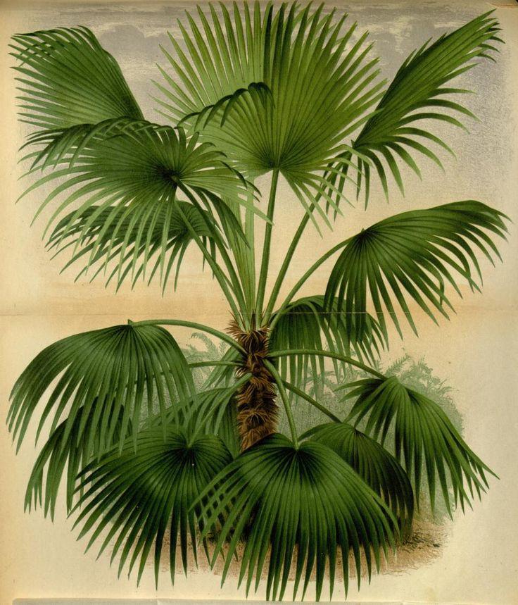 v.22 (1875) - L'Illustration horticole : - Biodiversity Heritage Library