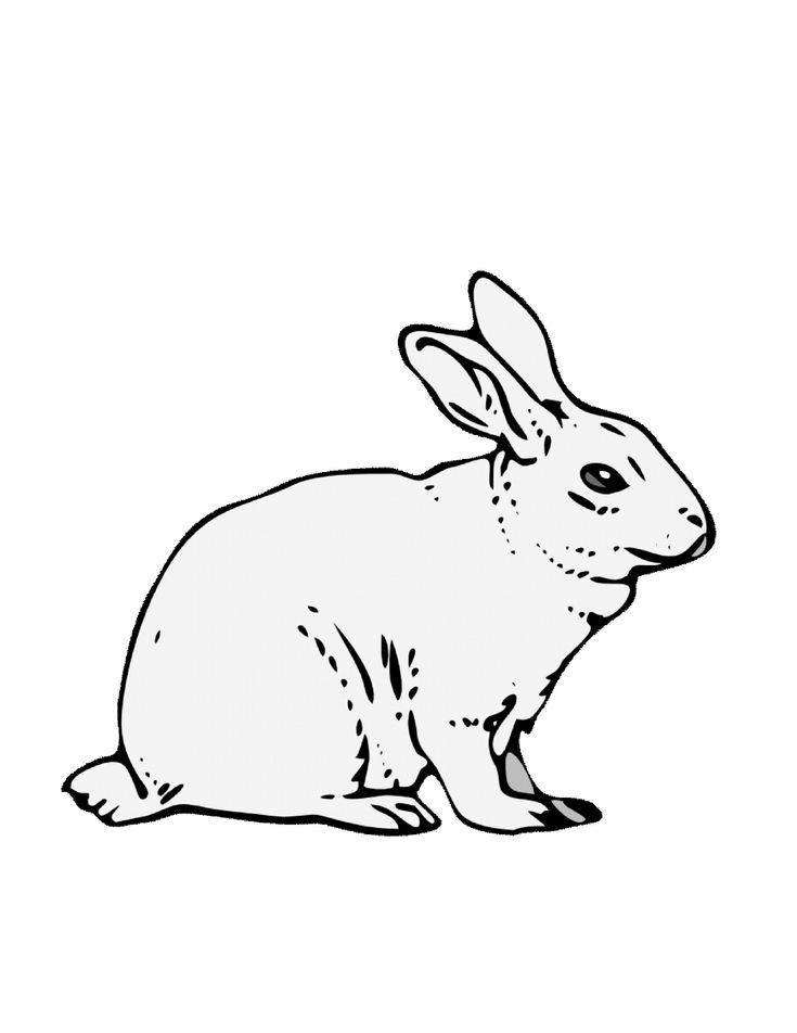 bunnies bunny coloring pages | 55 best images about Rabbit Images on Pinterest | Easter ...