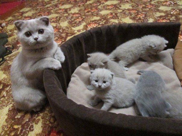 Oh My Kittens! They are above cute! I know  It is a cuteness overload! Just look how the Mom Cat is looking at the camera!