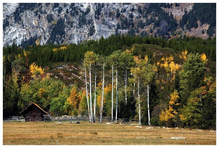 Fall colors in the Grand Tetons #5 - Grand Teton National Park, Wyoming
