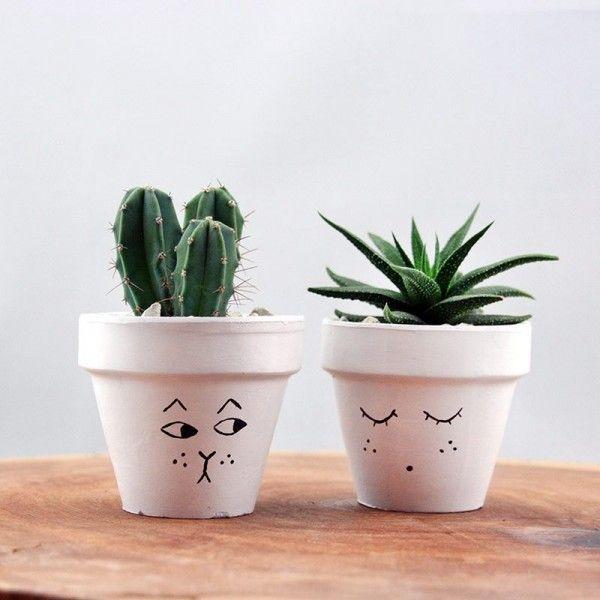 kedi-surat-sukulent-ve-kaktus