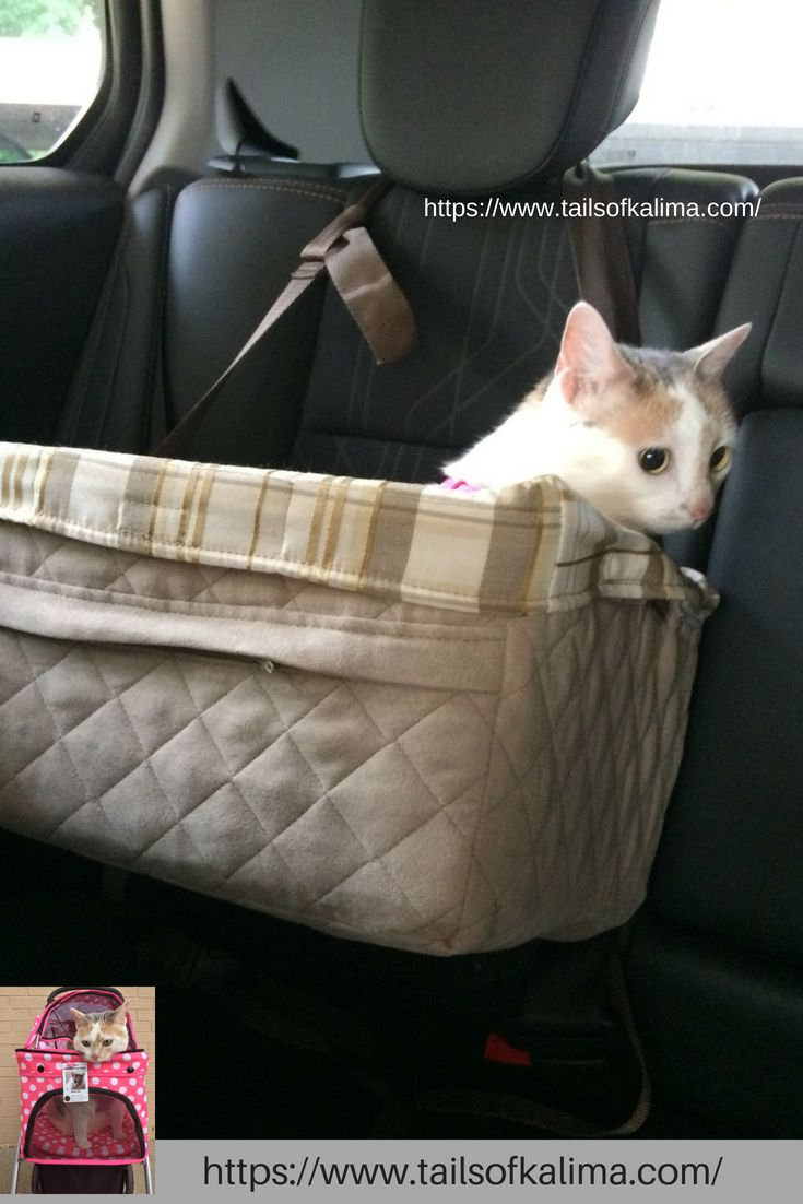 Cat Car Travel Tips Tails Of Kali Ma Cat Travel Therapy Cat Car Travel